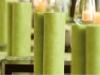 taraz-avocado